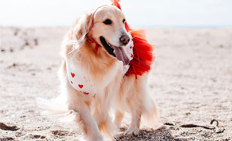 ドッグデプト/DOGDEPT DOG WEAR/ドッグウェア、犬服